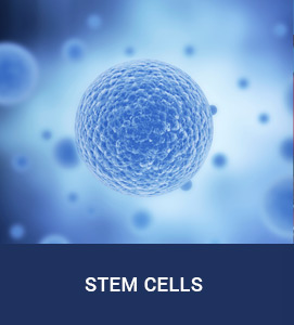 The Stem Cell Institute of Texas